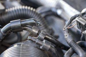 Marderschaden im Fahrzeug - zerbissene Kabel